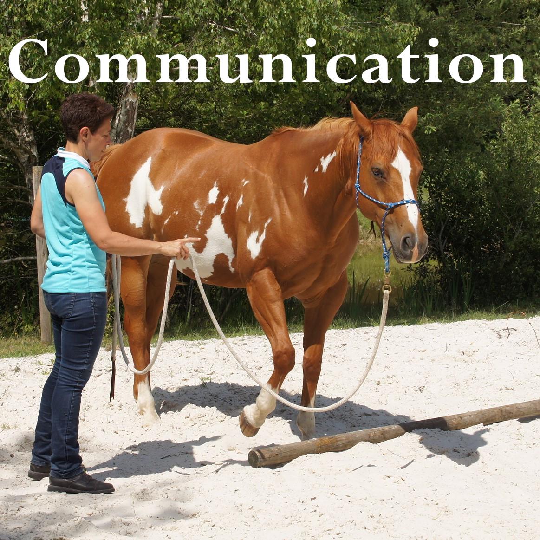 Juùent paint horse, approche éthologique, communication non-verbale